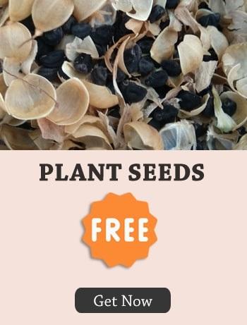 Sree Seeds